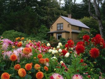 Календар робіт в саду і городі на листопад