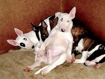 П'яні собаки