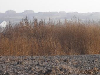 Ольга Киричко: «Ми не забираємо землю. Ми хочемо навести на ній порядок»