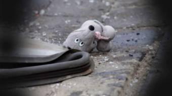 У Машівському районі загинув хлопчик, випавши із трактора
