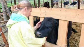 В Днепропетровской области создали приют для коров: подробности (Фото)