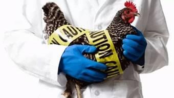В Україні зафіксували випадок пташиного грипу