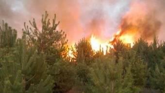 За минулу добу вогнеборці ліквідували 21 пожежу на відкритій території та 1 лісову пожежу
