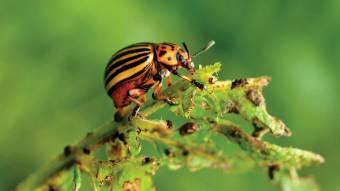 Урожай під загрозою: вУкраїні очікується справжнє нашестя хвороб та шкідників
