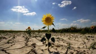 Спека і посуха: докладний прогноз на серпень