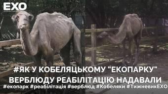 Як у кобеляцькому «Екопарку» верблюду реабілітацію надавали
