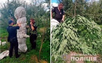 Ботанік–пенсіонер та дерева коноплі