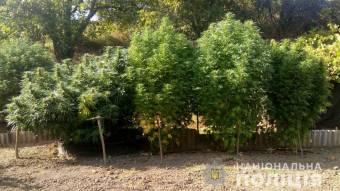 Житель Полтавського району вирощував цілий «конопляний садок»