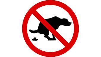 За неприбрані екскременти тварин хочуть штрафувати