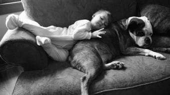 Про любов до тварин і нелюбов долюдей
