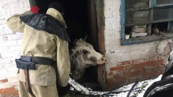 У Козельщинському районі рятувальники витягували з ями корову