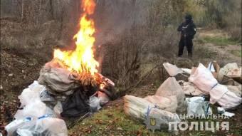 На Полтавщині знищили наркотиків на близько 1,5 мільйона гривень