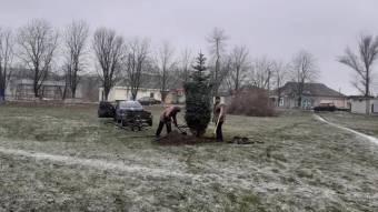 У Могилеві висадили новорічну ялинку