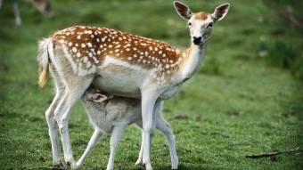 У Миргородському районі упіймали браконьєра, який застрелив самку оленя