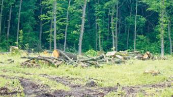 Поліцейські відкрили кримінальне провадження зафактом вирубки лісу