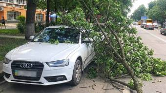 У Полтаві гілка впала з дерева на автомобіль поблизу місця, де дерево розтрощило терасу кафе