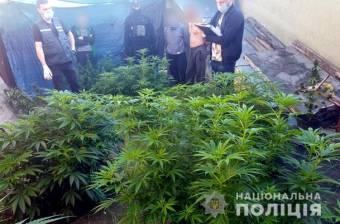 Чоловіка з Козельщини підозрюють у вирощуванні коноплі з метою збуту