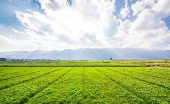 Міністр агрополітики Роман Лещенко офіційно оголосив старт земельної реформи