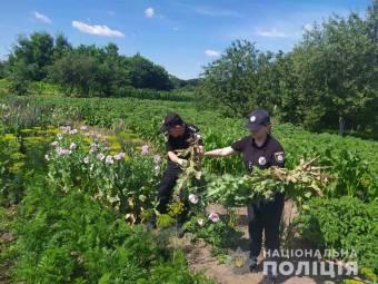 Миргородщина: на грядках вирощують мак