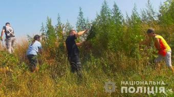 На Решетилівщині знайшли поле, на якому росло більше 5000 конопель