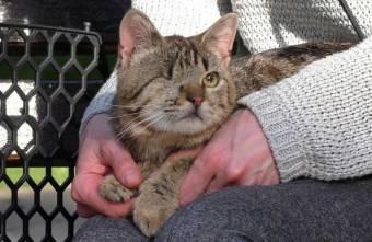 У Лубнах засудили живодера, який знущався з кошеняти