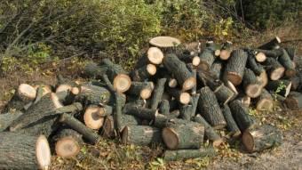 На Полтавщині судитимуть підприємця, який незаконно нарубав дров на мільйон гривень
