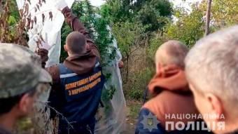 На Миргородщині пенсіонер у теплиці вирощував коноплю