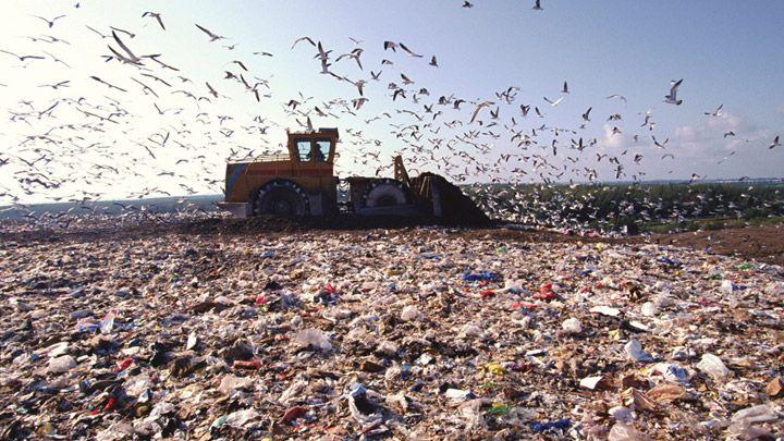 """Результат пошуку зображень за запитом """"львівське сміттєзвалище"""""""