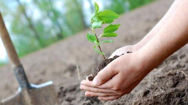 Герои сажают деревья! ** ЛЕСОСАД **