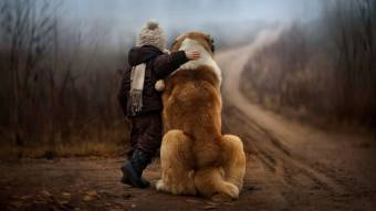 Знайшли малюка із собакою, який заблукав у лісі