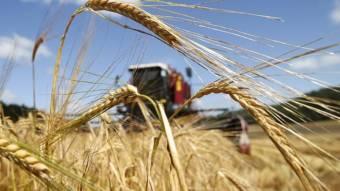 На Полтавщини завершили збирання ранніх зернових культур