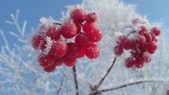 Коли прийдуть заморозки: прогноз синоптика