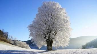 Синоптики обіцяють полтавцям нічні морози до -24º