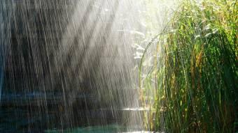 Прогноз погоди на Полтавщині: чи припиняться дощі та коли настане справжнє літо