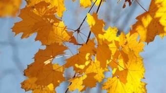 Довгі вихідні: скільки відпочиватимемо в жовтні